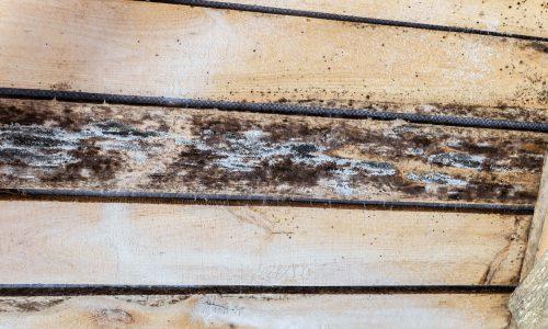 Nuisibles du bois