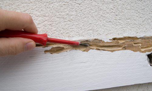 Diagnostic termites avant travaux ou démolition