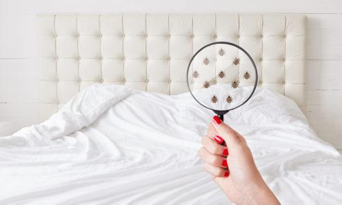 désinsectisation punaises de lit